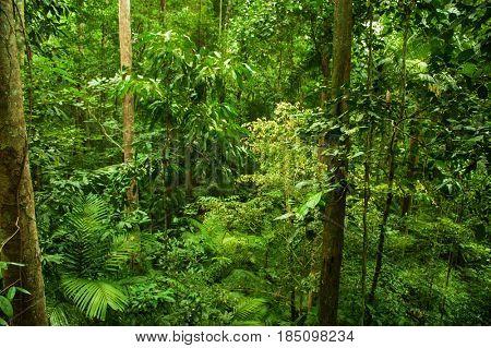 Tropical rainforest landscape, Taman Negara, Malaysia.