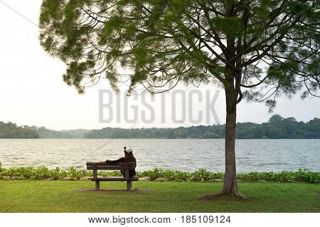 Young Girl Sitting On Bench Under Lone Tree.  Front Of Her Have Sunset And Sea Are Background. This