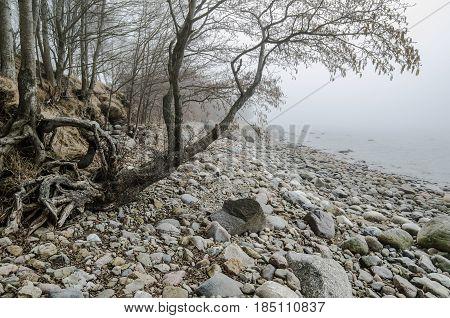 Stony coast of Baltic sea foggy in the morning