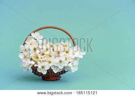 Gentle cherry blossoms in a small wooden basket. Close-up. Spring. Card. Tenderness.Celebratory background.