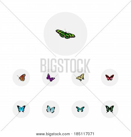 Realistic Checkerspot, Papilio Ulysses, Lexias And Other Vector Elements. Set Of Moth Realistic Symbols Also Includes Monarch, Bluewing, Red Objects.