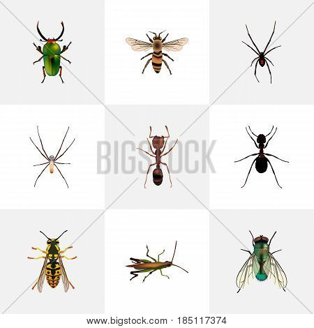 Realistic Bee, Ant, Spider And Other Vector Elements. Set Of Hexapod Realistic Symbols Also Includes Spider, Wisp, Bee Objects.