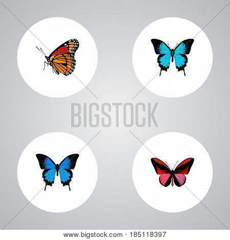 Realistic Papilio Ulysses, Milkweed, Common Blue And Other Vector Elements. Set Of Beauty Realistic Symbols Also Includes Red, Cynosura, Bluewing Objects.