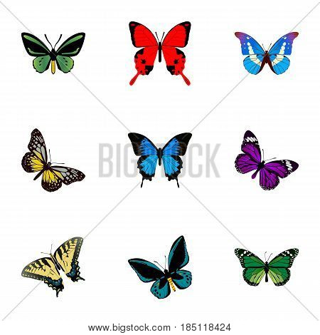 Realistic Birdwing, Demophoon, Bluewing And Other Vector Elements. Set Of Moth Realistic Symbols Also Includes Purple, Fly, Malachite Objects.