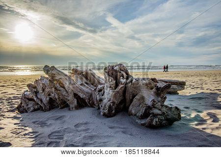 Giant Driftwood at the Beach Framing a Couple Walking Along the Shore at Sunset