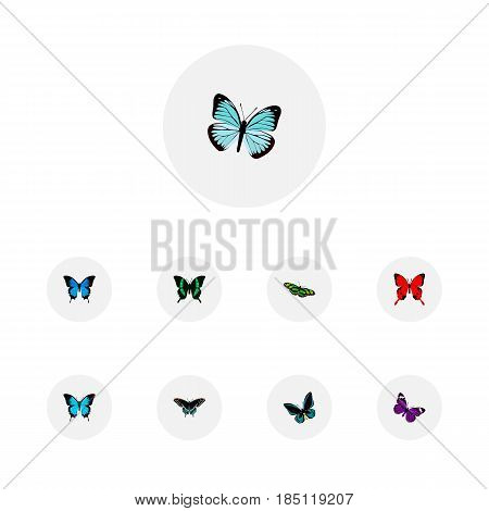 Realistic Common Blue, Lexias, Demophoon And Other Vector Elements. Set Of Beautiful Realistic Symbols Also Includes Blue, Tropical, Cypris Objects.