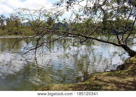 natureza com lago lindo e árvore na água