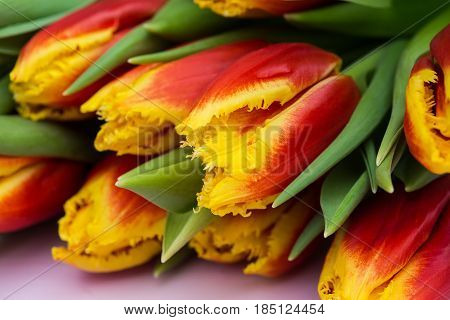 Beautiful bouquet of red and yellow tulips on pink wooden background. Close up.