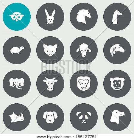 Set Of 16 Beast Icons Set.Collection Of Tortoise, Bunny, Hound And Other Elements.