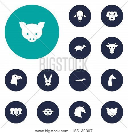 Set Of 12 Brute Icons Set.Collection Of Lamb, Bunny, Aquila And Other Elements.