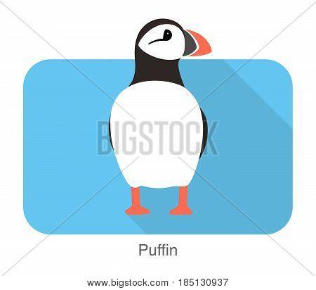 Iceland Bird, Flat Cute Puffin, Vector Illusration