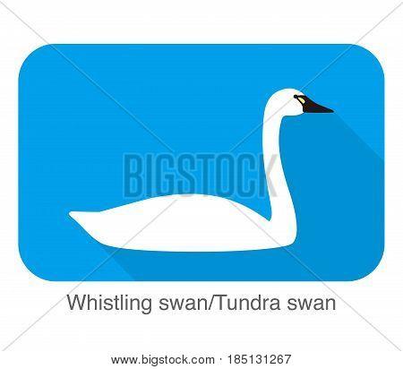 Whistling Swan, Cartoon Flat Icon, Vector Illustration