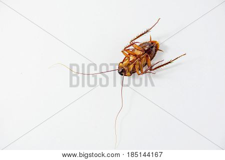 Cockroach dead isolated on white background. Included clipping path