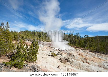 Steamboat geyser minor eruption in the Yellowstone national park, USA