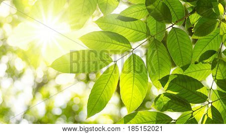 Plant leave and natural green environment background with sunlight for design