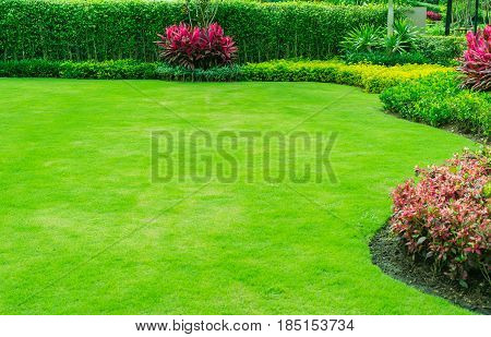 Green lawns and shrubs are trimmed in a rounded shape along the green fence, landscape garden design.