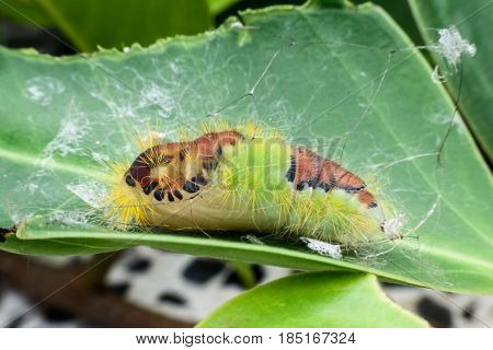 Super macro cute caterpillar on green leaf