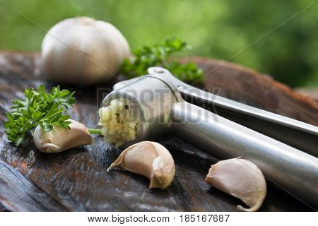 Crushed garlic in a metal garlic press. Healthy food.