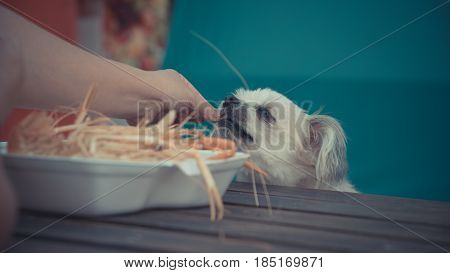 Dog Eat A Prawn Fried Shrimp Salt Feed Pet Owner