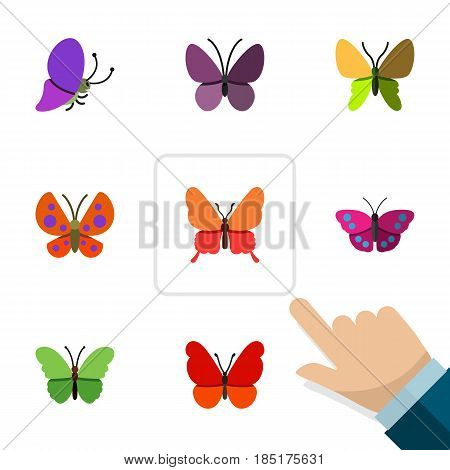 Flat Moth Set Of Danaus Plexippus, Summer Insect, Violet Wing And Other Vector Objects. Also Includes Archippus, Summer, Butterfly Elements.