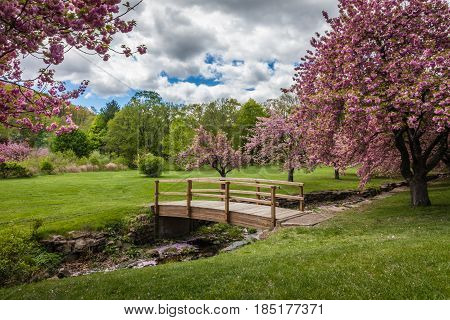 A small wooden bridge covers a creed surrounded by lush pink cherry trees in full bloom