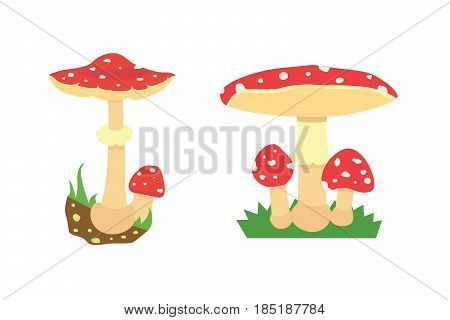 Amanita poisonous mushroom, isolated vector on white