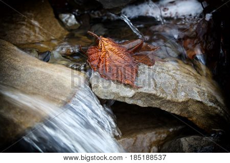 Yellow autumn leaf in a stream flowing through the rocks. Shooting with a long exposure time