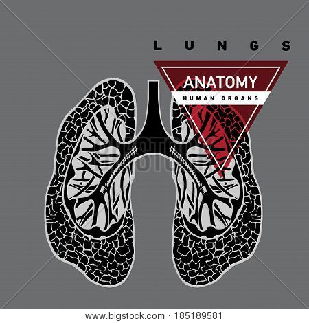 Lungs hand drawn. Human organ. Anatomy of organ lungs