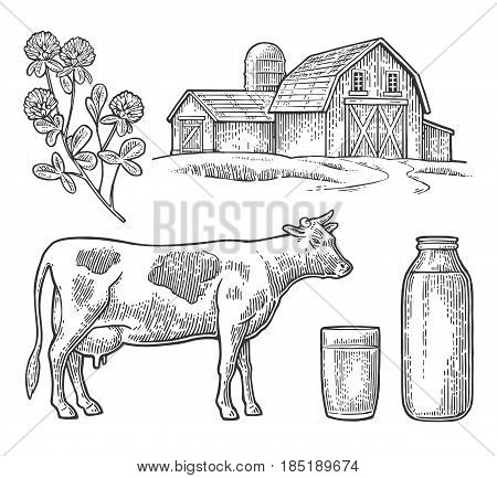 Set Milk farm. Cow head, clover, glass and bottle. Vector engraving vintage black illustration. Isolated on white background.