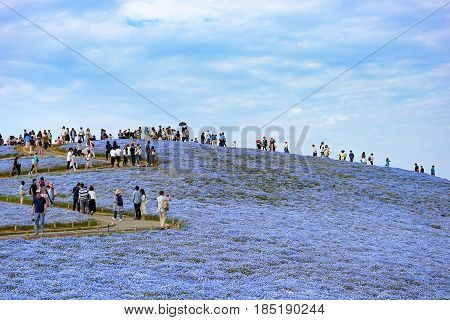 2017 MAY 06 IBARAKI JAPAN. Tourists at Hitachi Seaside Park. Hitachi Seaside Park is the most popular place to travel on spring in JAPAN.