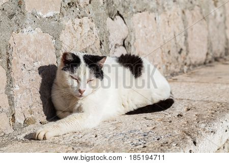 A cat sleeps on a limestone seat in Dubrovnik's old town.