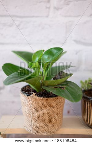 Young plants in plant pot Ecology concept