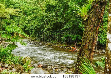 HDR photo of a Rainforest River in Costa Rica
