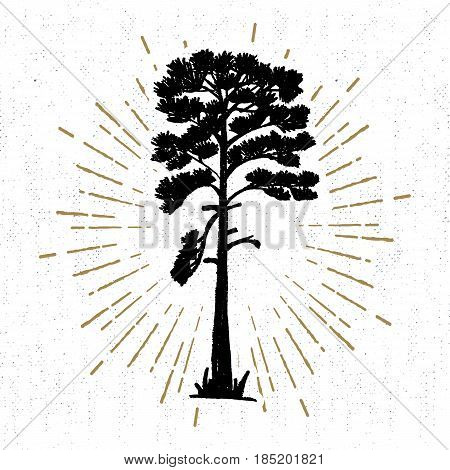 Hand drawn icon with a textured pine vector illustration.