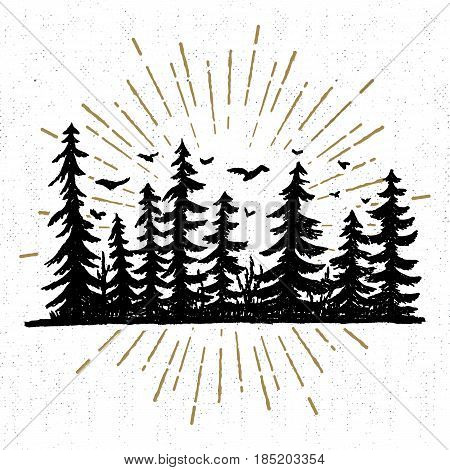 Hand drawn icon with a textured spruce trees vector illustration.
