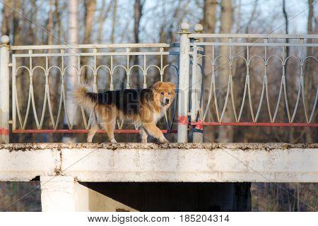 Stray dog runs on an empty platform