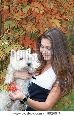 portrait of beautiful girl keeping pretty white West Highland dog on her hands outdoor poster