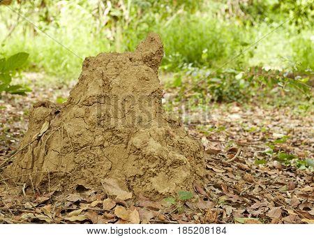 Termite In The Park