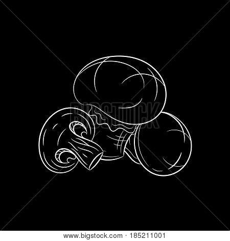 Hand drawn champignon mushroom sketch isolated on black background. Organic food. Vector engraved illustration