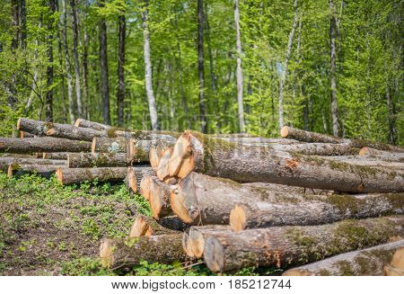 A stack of felled oak trees. Selective focus.