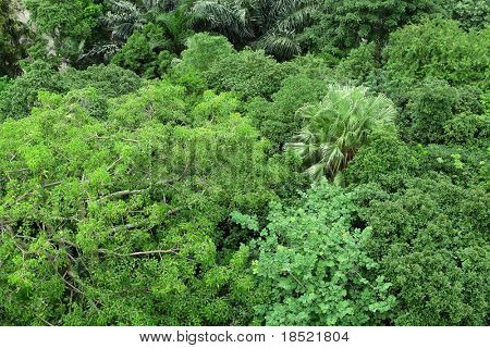 forest view from high