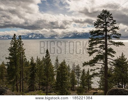Pine and fir trees by Lake Tahoe in stormy spring day with snow on the distant Sierra Nevada Mountains