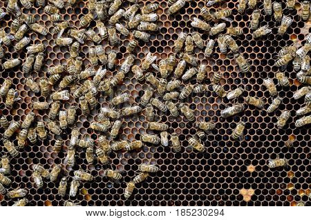 Bees fed and warmed to the young larvae honeycomb. Apiculture