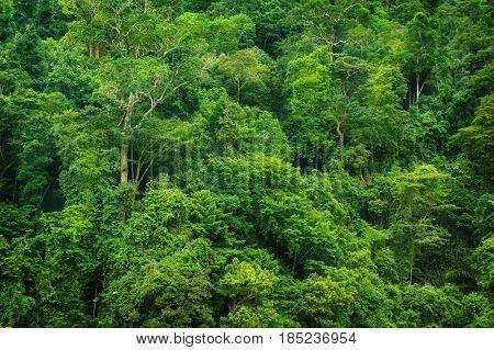 Tropical rainforest landscape view, Taman Negara, Malaysia.