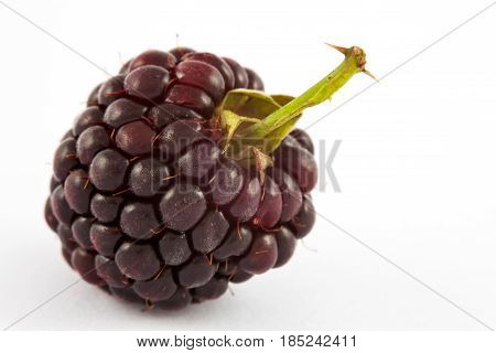 Blackberry (Rubus glaucus) isolated in white background