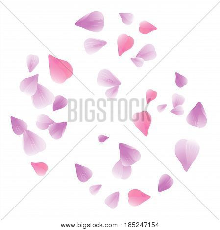 Flowers design. Flowers petals. Abstract background with flying pink, purple rose petals. Vector illustration isolated on white background. EPS. 10 cmyk