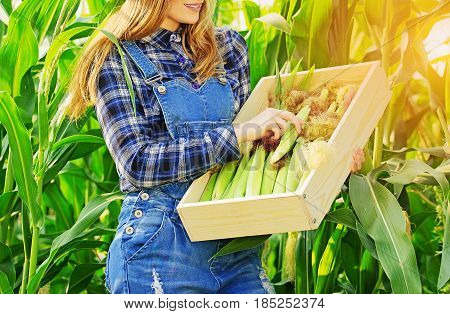 Harvest Time Concept. Portrait Of Beautiful Farmer Girl In Coveralls Holding Box With Corn While Sta
