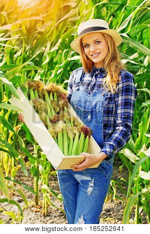 Time To Crop Corn. Portrait Of Young And Attractive Smiling Girl In Hat And Coveralls Holding Box Wi