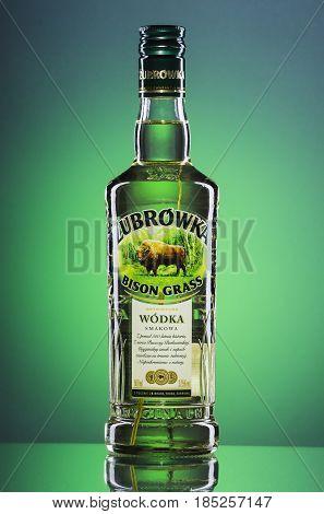 Zubrowka grass  flavored vodka on green gradient background. Bison grass vodka is Polish brand. It is produced in Polmos Bialystok.