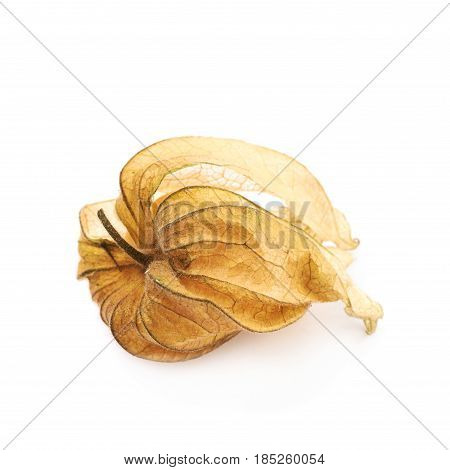 Physalis fruit berry with the husk isolated over the white background